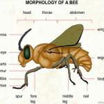 Create a Buzz!  April 10
