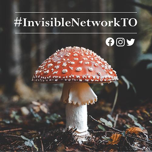 The NEW Toronto Mycelial Network